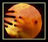 hands seen thru skin